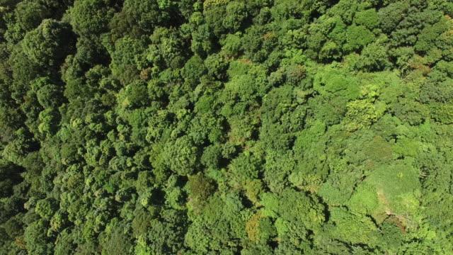 Luchtfoto van het regenwoud