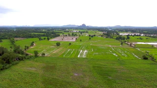 Luftaufnahme von Reisfeld am Morgen in Landschaft