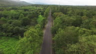Aerial view of road in the forest