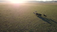 Aerial view of small horse herd running across the landscape at sunrise