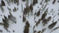 Aerial view of snowmobiles in the woods