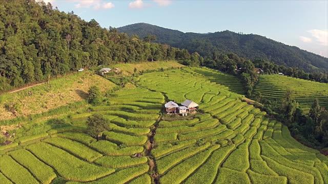 Luchtfoto van terrasvormige rijstvelden
