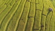 Aerial view of Terraced Paddy Fields