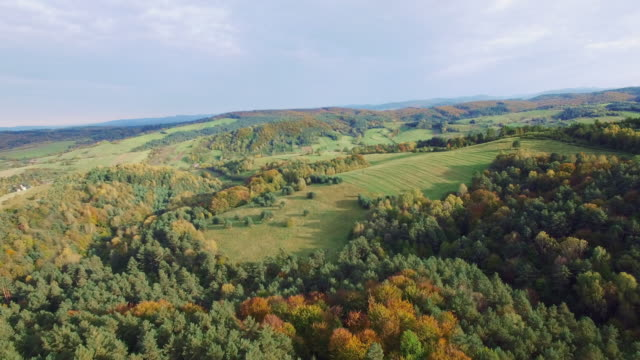 Aerial view of the autumnal forest. Pines and maples