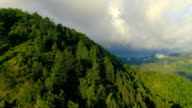Luftaufnahme des Waldes Sommer