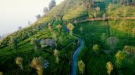 Aerial view on tea plantation in Sri Lanka