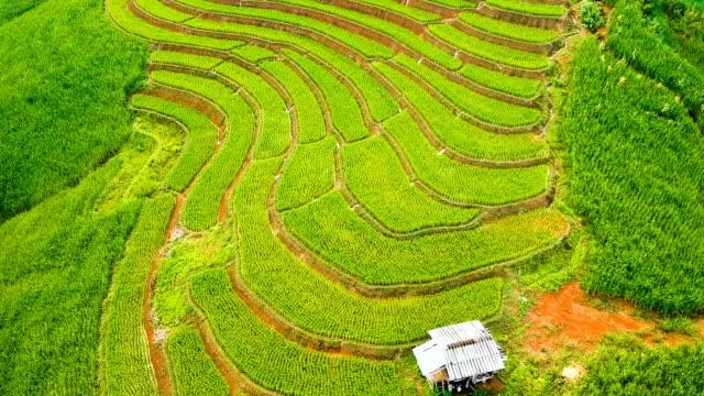 Luftaufnahme über terrassierte Reisfelder am Morgen in Thailand
