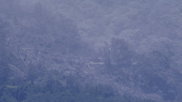 Aerial view Pan shot Burnt down trees on the ashcovered mountain slope