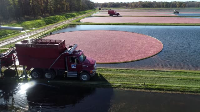 Aerial views of cranberry bog during harvest as truck gathers cranberries at Cutler Cranberry in Camp Douglas Wisconsin on Wednesday Oct 18 2017...