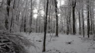 Aerial W/S, Atmospheric Forest in Winter