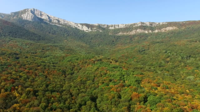 AERIAL:Autumn colorful forest on mountain ridges