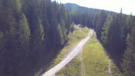 Aerial:Fly through the pine forest