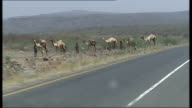 Nomadic tribesmen / Women and children in traditional costume / Camels in desert Nomads with camels along roadside as seen from moving car / Point of...