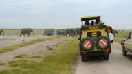 MS Africa safari vehicles with tourists and elephant herd walking between vans / Amboseli National Park, Kenya