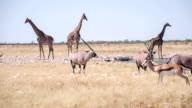 WS African Animals By The Waterhole