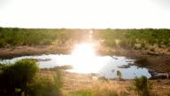 WS African Birds By The Waterhole