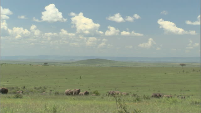 African Bush Elephants (Loxodonta africana) in huge landscape, Kenya, Africa