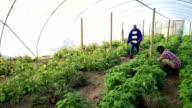 African Elder mentors young man in organic gardening