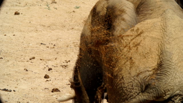 CU African Elephant cooling down in desert / Namibia