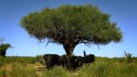 African elephant family herd