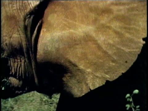 ECU, COMPOSITE, African Elephant (Loxodonta africana), Tsavo National Park, Kenya
