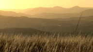 African grass savannah and mountain layers sunset
