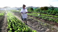 African organic garden business owner  digital tablet