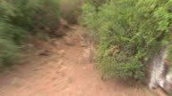 African Wild Dogs (Lycaon pictus); with audio, Kenya