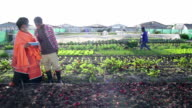 African woman discusses over digital tablet in organic farm