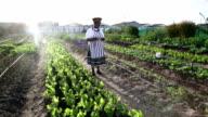 African woman organic farmer with digital tablet