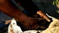 MCU African woman's hands working soil on farm, KwaZulu Natal, South Africa