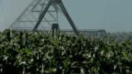 Agricultura rega gård sprinkler