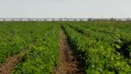 Agricultura rega gård
