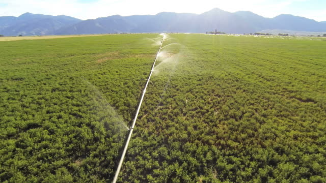 Agricultural field being watered
