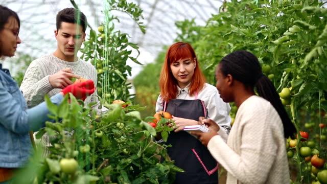 Agrarische onderzoeken en gardeningGroup van de boeren doen onderzoeken in kas