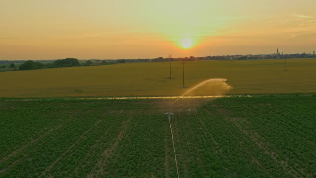 AERIAL Agricultural sprinkler spraying a field