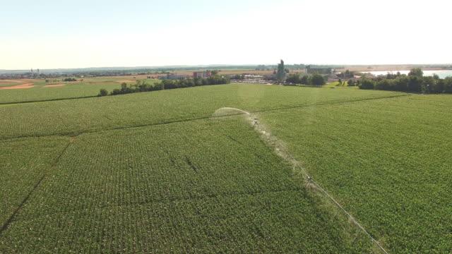AERIAL Agricultural sprinklers watering a corn field