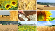 Agriculture - montage