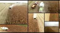 Agricoltura compilation montaggio