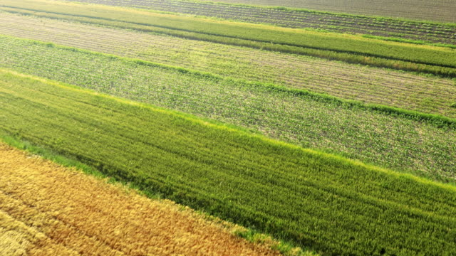 AERIAL Agriculture fields