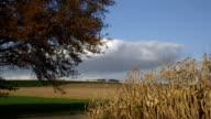 Agriculture harvest landscape