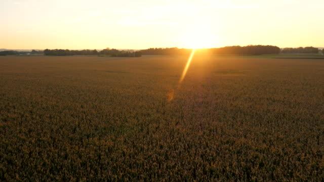AERIAL Agriculture Landscape At Sunset