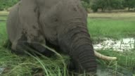 Ahead of the African Elephant Summit in Botswana