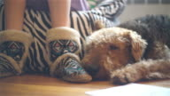 Airedale terrier dog sleeps at the floor next to his teenager owner