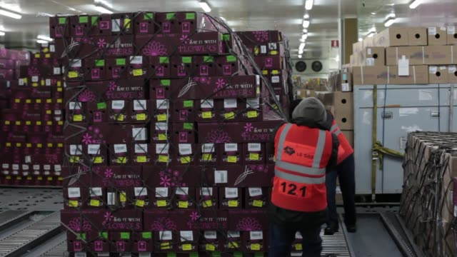 Airport employees pack boxs of flowers in cargo for shipment Boxes of Flowers Prepare for Shipment on February 09 2012 in Bogota Colombia