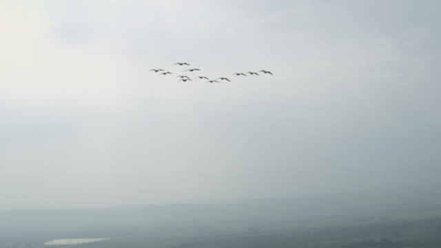 Air-to-air SLO MO LA behind group of Barnacle Geese gliding and flying with sky then misty landscape in background