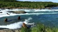 Alaska Brown Bear Fishing for Salmon at McNeil River Falls