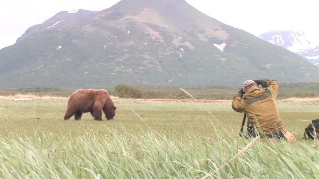 MS, USA, Alaska, Katmai National Park, Art Wolfe photographing brown bear (Ursus Arctos) grazing in field, mountain in background