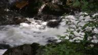 Alaskan Salmone saltando a monte durante la migrazione