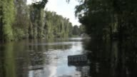 Alligator invested flooding area near Black Creek in Middle Burg Clay County Florida United States on September 13 2017 Hurricane Irma took an...